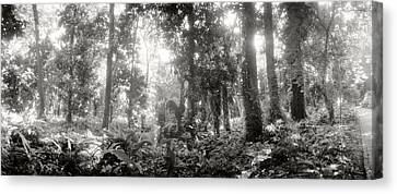 Trees In A Botanical Garden, Jardim Canvas Print by Panoramic Images