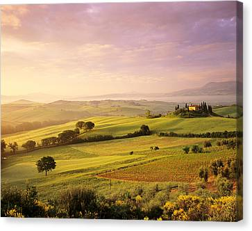 Trees In A Field At Sunrise, Villa Canvas Print by Panoramic Images
