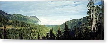 Trees In A Forest, Hurricane Ridge Canvas Print by Panoramic Images