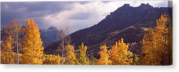 Trees In A Forest, U.s. Route 550 Canvas Print by Panoramic Images