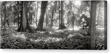 Trees In A Garden, Jardim Botanico Canvas Print by Panoramic Images