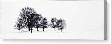 Trees In A Snowy Field In Chatsworth Canvas Print by John Doornkamp