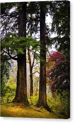 Trees In Autumn Glory. Scotland Canvas Print by Jenny Rainbow