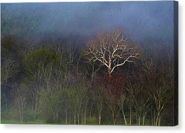 Trees In Fog 4 Canvas Print by Dena Kidd