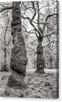 Trees In Hyde Park London Canvas Print by Jim Hughes