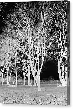 Trees In Park 2 Canvas Print by Chalet Roome-Rigdon