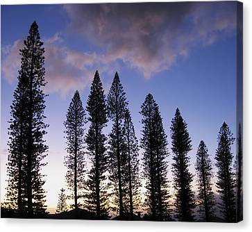 Trees In Silhouette Canvas Print by Adam Romanowicz