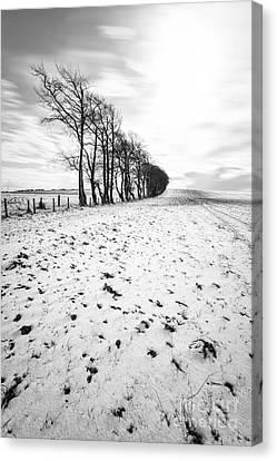 Trees In Snow Scotland II Canvas Print by John Farnan