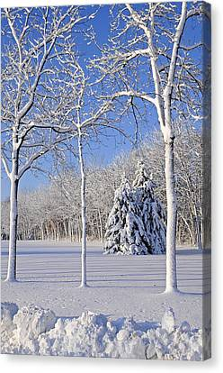 Trees In Snow  Wisconsin Canvas Print by Anonymous
