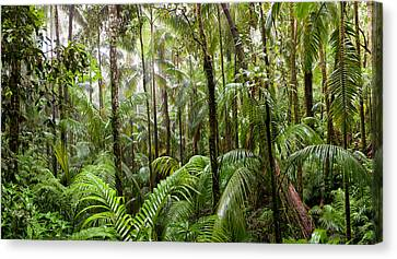 Trees In Tropical Rainforest, Eungella Canvas Print by Panoramic Images