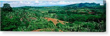Trees On A Hill, Chamarel, Mauritius Canvas Print by Panoramic Images