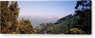 Trees On A Hill, Sausalito, San Canvas Print by Panoramic Images