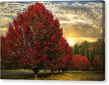 Trees On Fire Canvas Print by Debra and Dave Vanderlaan