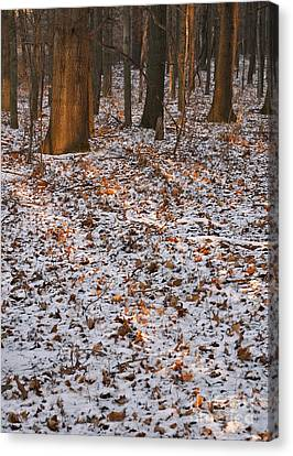 Trees Canvas Print by Steven Ralser