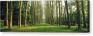 Trees Versailles France Canvas Print by Panoramic Images
