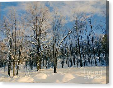 Tress In The Snow Canvas Print by Gloria Pasko