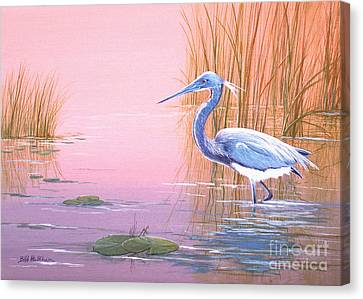 Tricolored Heron Canvas Print by Bill Holkham