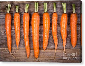 Trimmed Carrots In A Row Canvas Print by Jane Rix