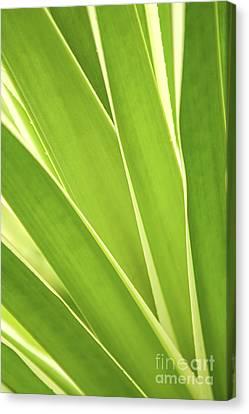 Tropical Leaves Canvas Print by Elena Elisseeva