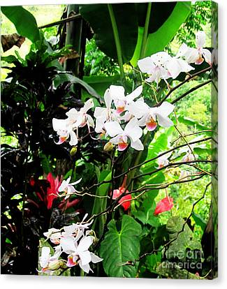 Tropical Orchids Canvas Print by Tina M Wenger