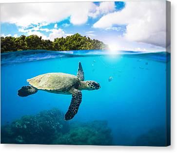Tropical Paradise Canvas Print by Nicklas Gustafsson