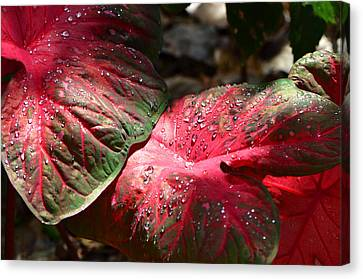 Tropical Rain - Botanical Art By Sharon Cummings Canvas Print by Sharon Cummings