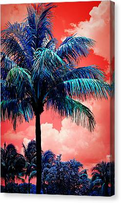 Tropical Red Canvas Print by Laura Fasulo