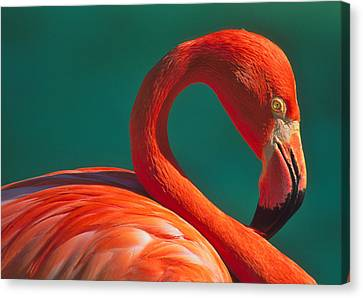 Tropical Rose Canvas Print by Tony Beck