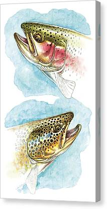 Trout Study Canvas Print by JQ Licensing