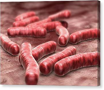 Tuberculosis Bacteria Canvas Print by Harvinder Singh