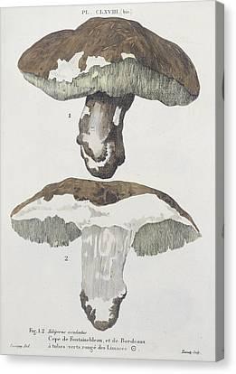 Tubiporus Esculentus Canvas Print by De Lussigny