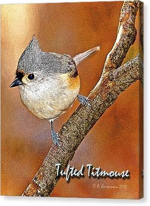 Canvas Print featuring the photograph Tufted Titmouse by A Gurmankin