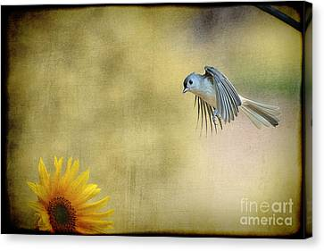 Tufted Titmouse Flying Over Flower Canvas Print by Dan Friend