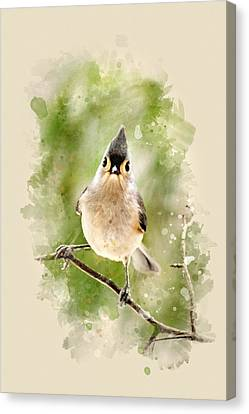 Tufted Titmouse - Watercolor Art Canvas Print by Christina Rollo