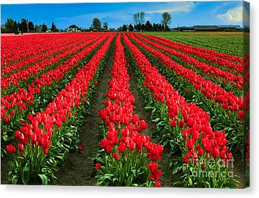 Tulip Cornucopia Canvas Print by Inge Johnsson