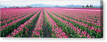 Tulip Fields, Skagit County, Washington Canvas Print by Panoramic Images