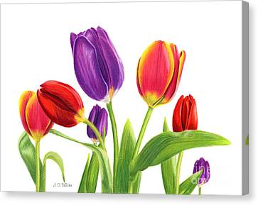Tulip Garden On White Canvas Print by Sarah Batalka