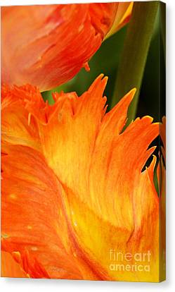 Tulip Canvas Print by Paul W Faust -  Impressions of Light