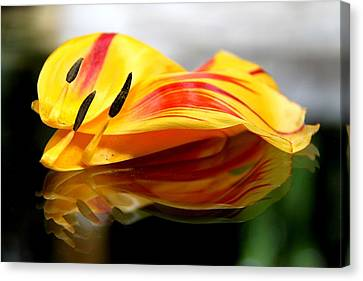 Tulip Reassembled Canvas Print by  Andrea Lazar