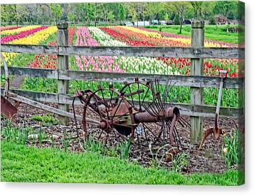 Tulip Time Canvas Print by Cheryl Cencich