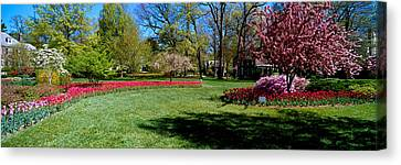 Tulips And Cherry Trees In A Garden Canvas Print by Panoramic Images