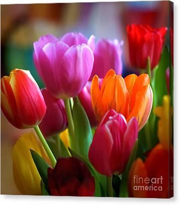 Tulips Light Canvas Print by Lutz Baar
