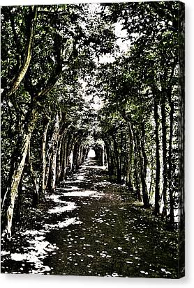 Tunnel Of Trees ... Canvas Print by Juergen Weiss