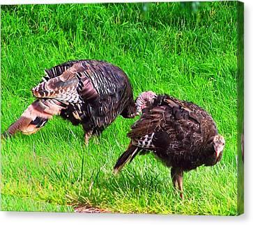 Turkeys In A Field Canvas Print by Chris Flees
