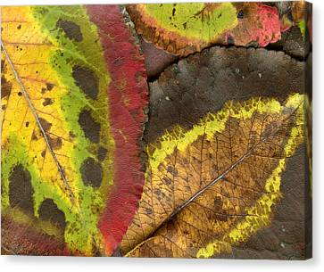 Turning Leaves 2 Canvas Print by Stephen Anderson