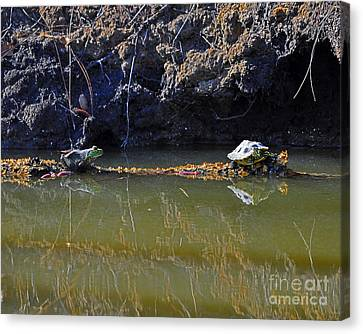 Turtle And Frog On A Log Canvas Print by Al Powell Photography USA