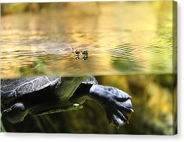 Turtle - National Aquarium In Baltimore Md - 12124 Canvas Print by DC Photographer