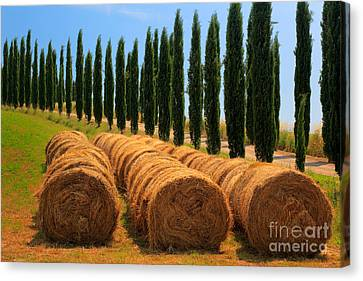 Tuscan Hay Canvas Print by Inge Johnsson