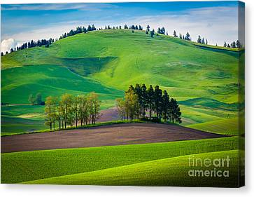 Tuscan Palouse Canvas Print by Inge Johnsson