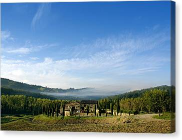 Tuscan Sky Vineyard Canvas Print by Norman Pogson